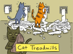 cat_treadmill